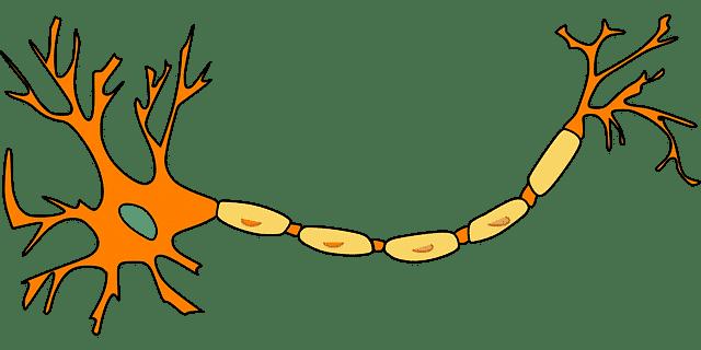 un neurone non grillé